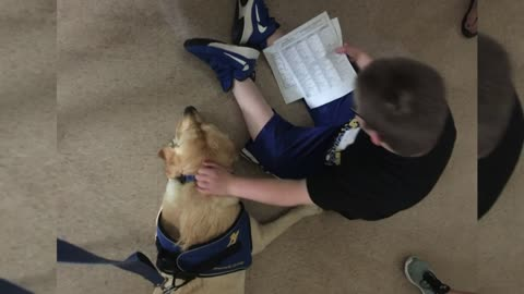 Mukwonago High School 'facility dog' provides outlet for...
